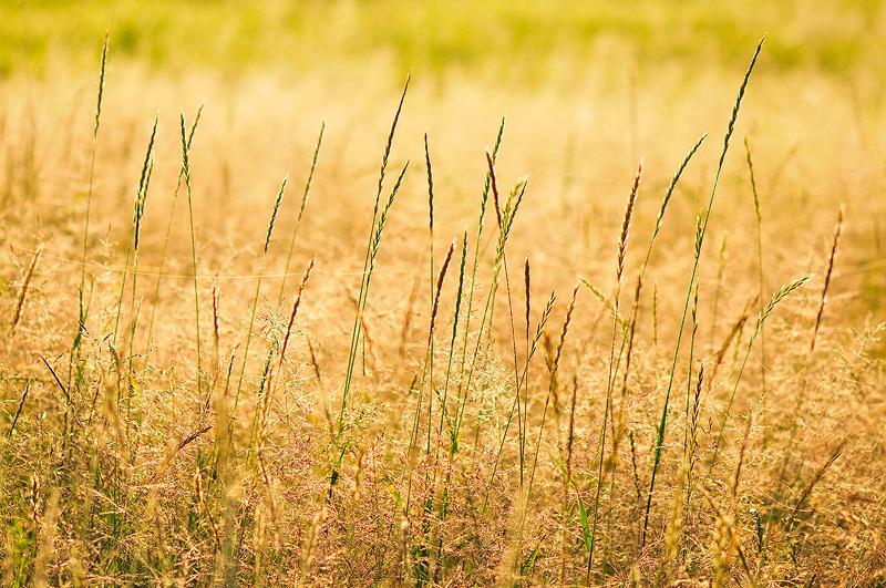 Grasses Clip Art
